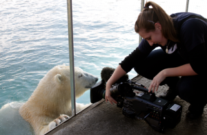 Picture of Director Becca filming a polar bear